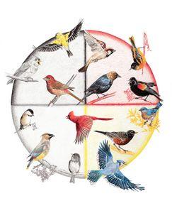 NE Songbirds by Season