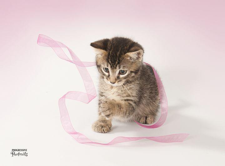 Kitten with Ribbon - Progressive Portraits by Deborah Ann Klenzman
