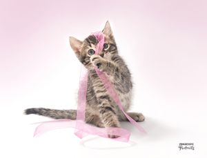 Kitten with Ribbon 2