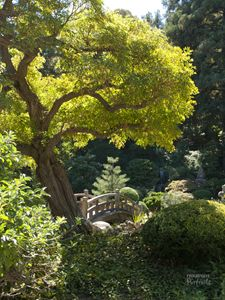 Japanese Garden - Progressive Portraits by Deborah Ann Klenzman