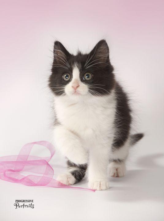 Kitten Black & White - Progressive Portraits by Deborah Ann Klenzman