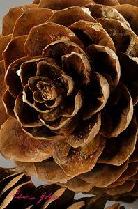 Pine Cone Petals