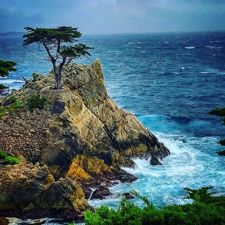 """""""The Lone Cypress"""" - KonKave Media Arts"""