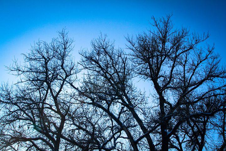 Winter Sky - KonKave Media Arts