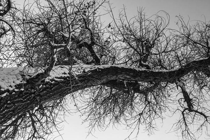 Black and White Winter No.3 - KonKave Media Arts