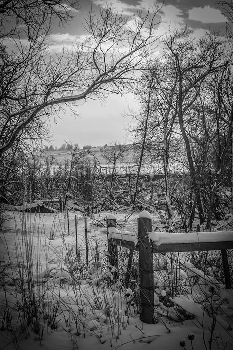 Black and White Winter No.2 - KonKave Media Arts