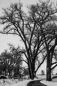 Black And White Winter No.1