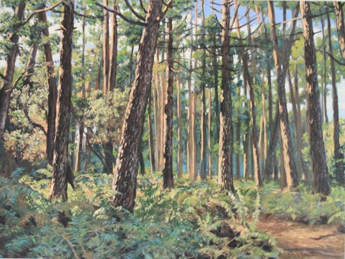 Pine-Eucaliptus Grove - Sergiotto Sergiottino