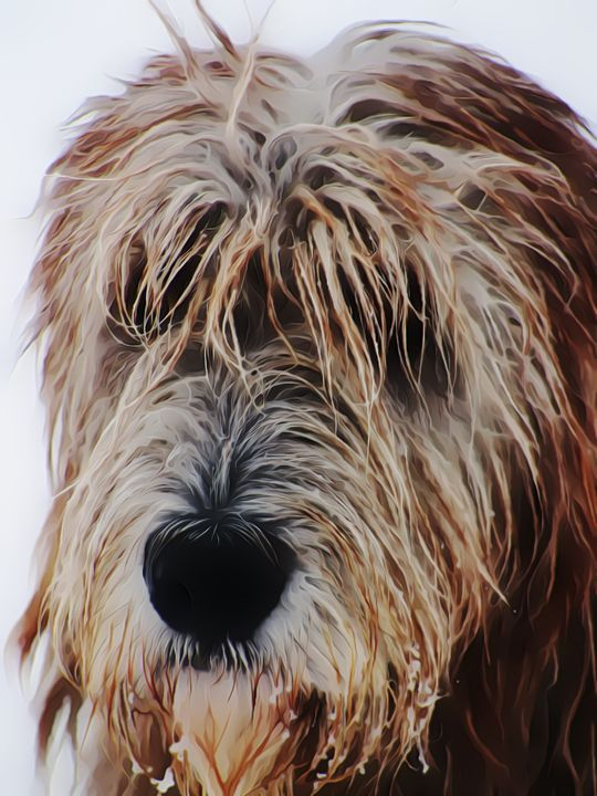 Irish Wolfhound Portrait - Yldrania's Gallery