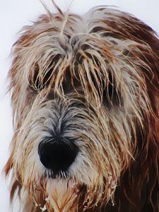 Irish Wolfhound Portrait - Yldrania's Gallery