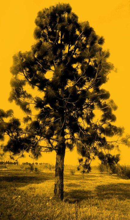 Tree Hues - 2 of 3 - ArtBySL
