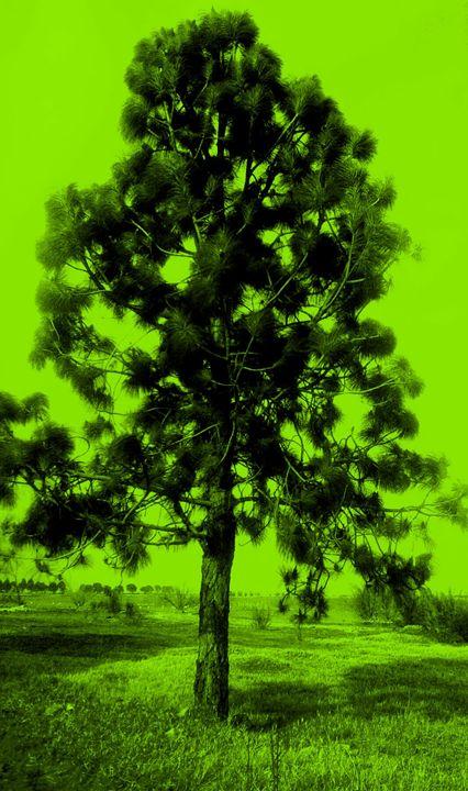 Tree Hues - 3 of 3 - ArtBySL