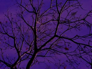 Purple Hues Tree