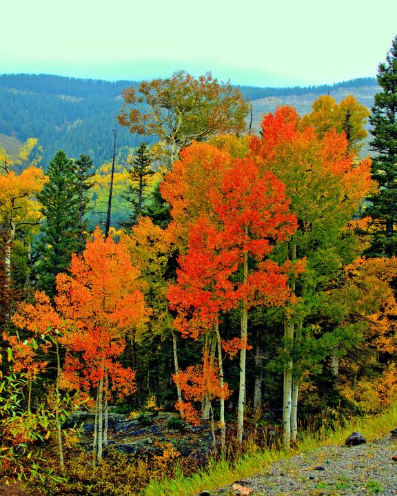 Fall Colors over Red Mountain Pass - MoatsArt