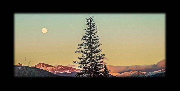 Lone Pine Tree Watching the Moon.. - MoatsArt