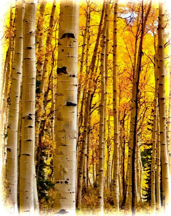 The Colors of Fall in Colorado - MoatsArt