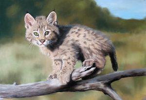 Lynx cub portrait