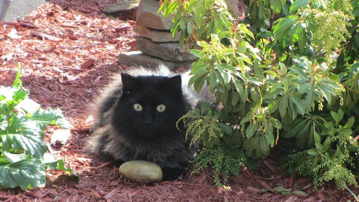 feline garden guard - tammy  owens