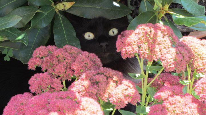 peeking pepper - tammy  owens