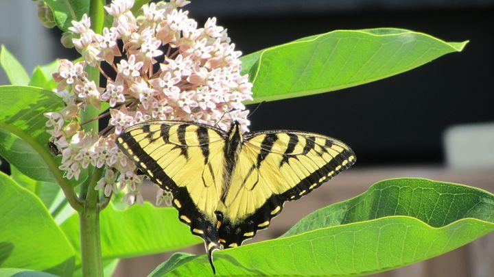 butterfly - tammy  owens