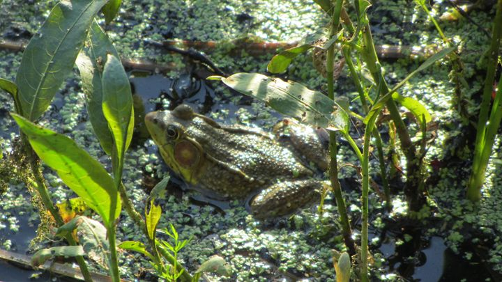 toad in sunlight - tammy  owens