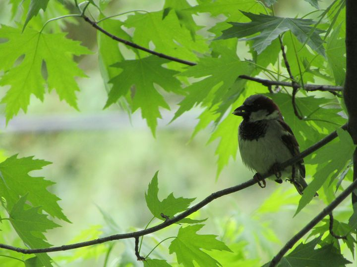 yard bird - tammy  owens