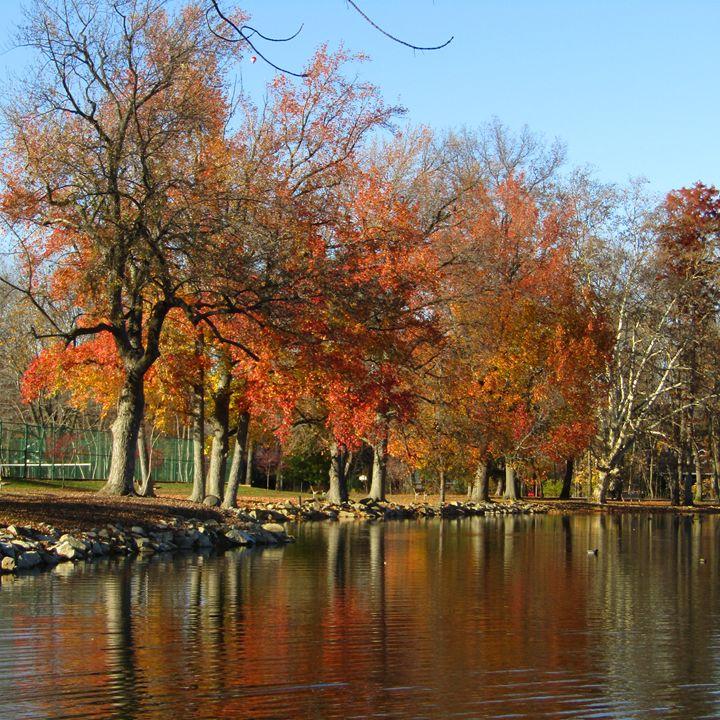 lake reflection - tammy  owens