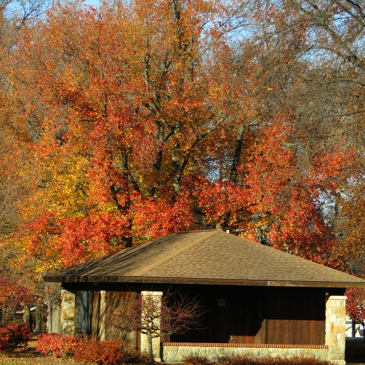 fall in the park - tammy  owens