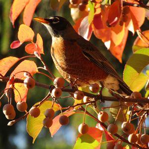 up close robin - tammy  owens
