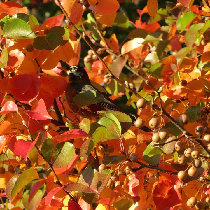 orangy  robin  wonderland - tammy  owens