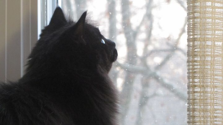 first snow for kitty - tammy  owens