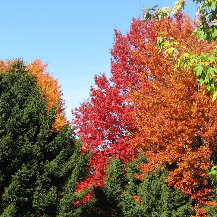 a rainbow of  autumn color - tammy  owens