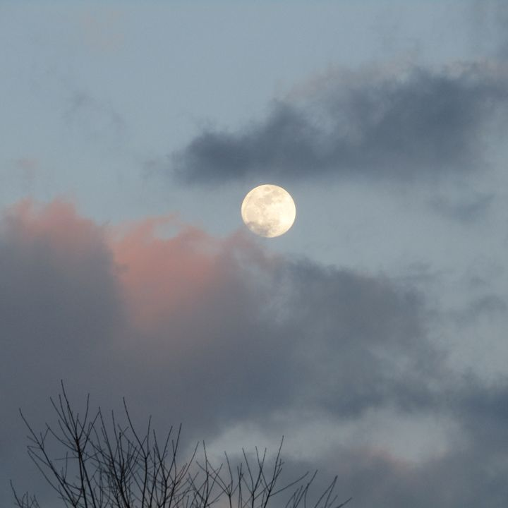 early evening moon - tammy  owens