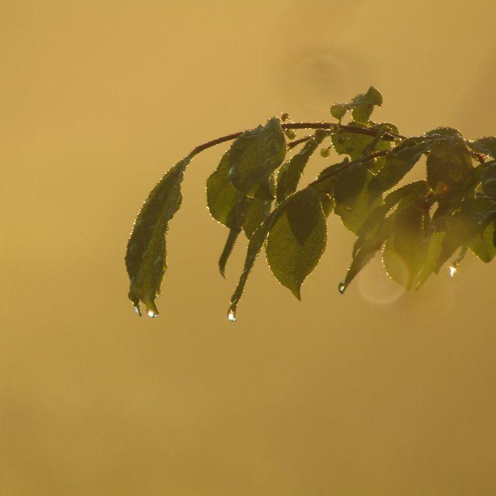 foggy morning dew drops - tammy  owens