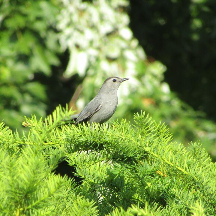 pine tree poser - tammy  owens