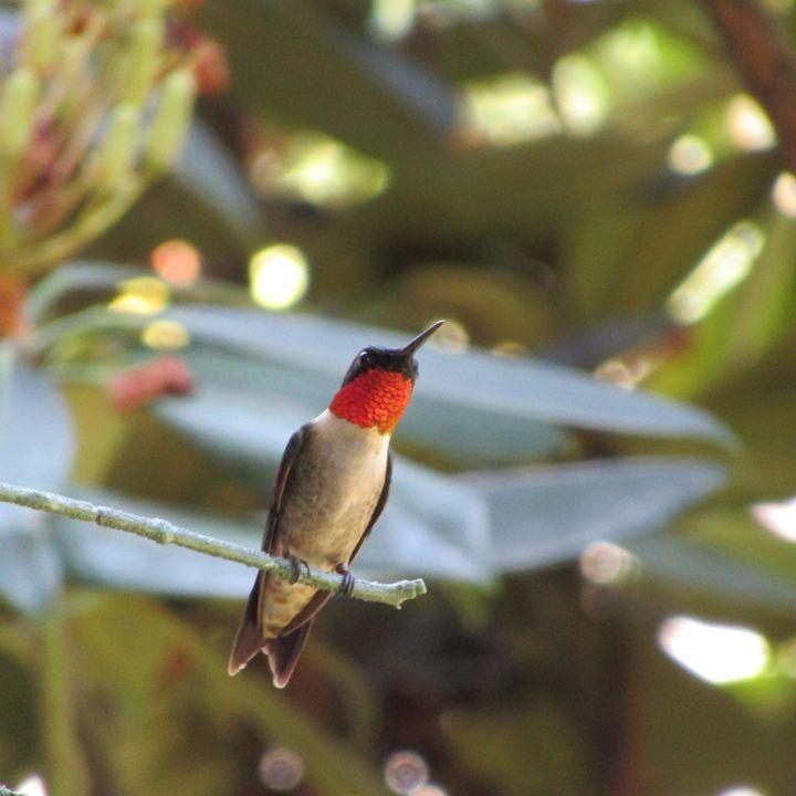 humming bird on alert - tammy  owens