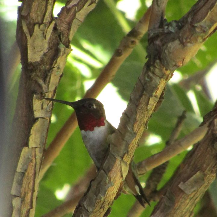 hidden hummer - tammy  owens