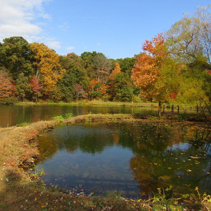 autumn lake - tammy  owens