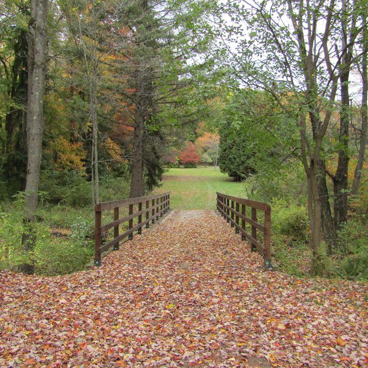 leafy bridge path - tammy  owens