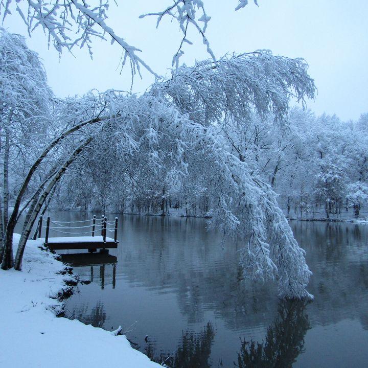 wintery morning snowfall - tammy  owens
