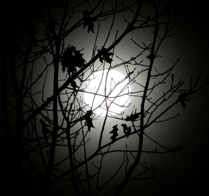 mysterious moon - tammy  owens