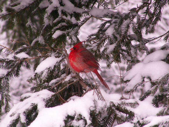 wintery resting place - tammy  owens