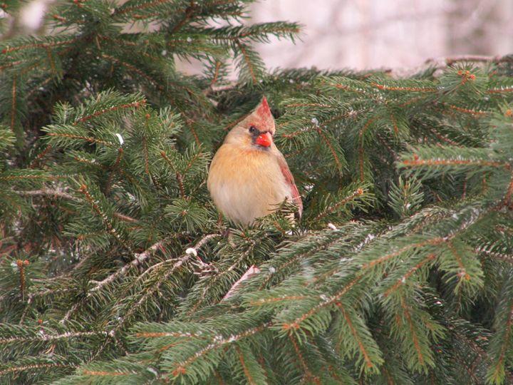 Flirty Birdie - tammy  owens