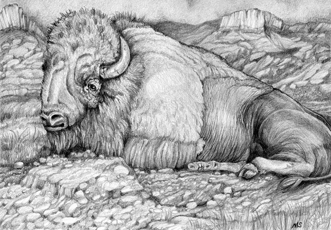 Buffalo Drawing - UnderPressure Studios