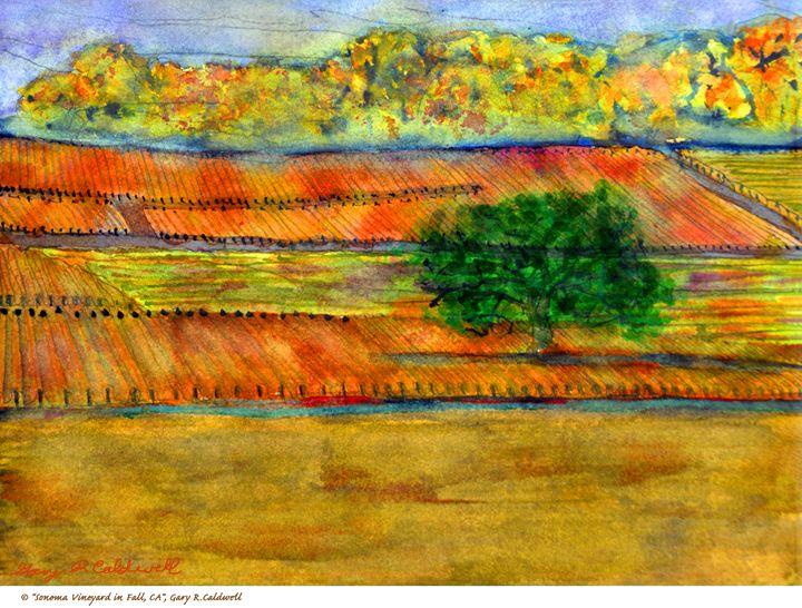 Sonoma Vineyard in Fall - Gary R. Caldwell   CADesign, Art & Photos