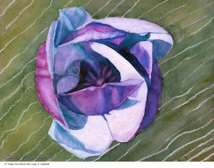 Magnolia Tree Flower - Gary R. Caldwell | CADesign, Art & Photos