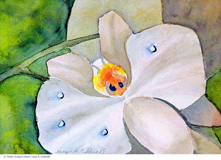 White Orchard Flower - Gary R. Caldwell | CADesign, Art & Photos