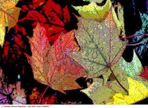 Digi Enhanced-Fall Leaves - Gary R. Caldwell   CADesign, Art & Photos