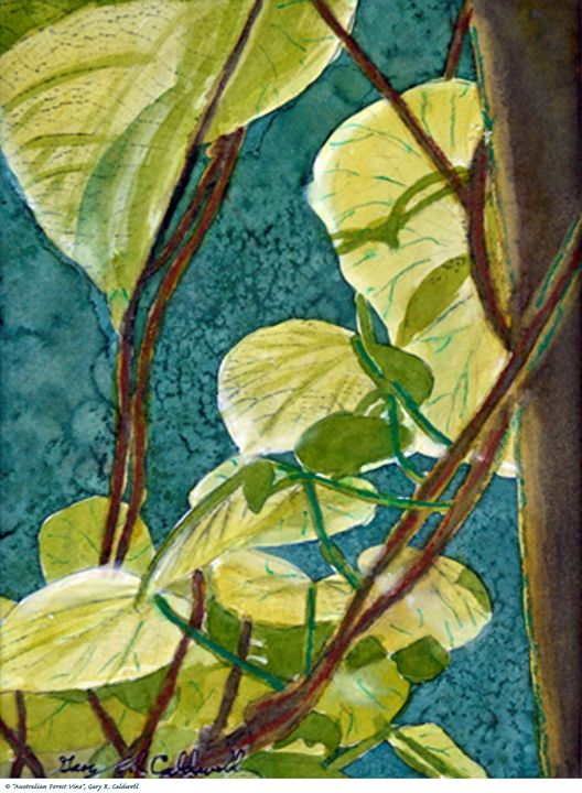 Australian Forest Vines - Gary R. Caldwell | CADesign, Art & Photos