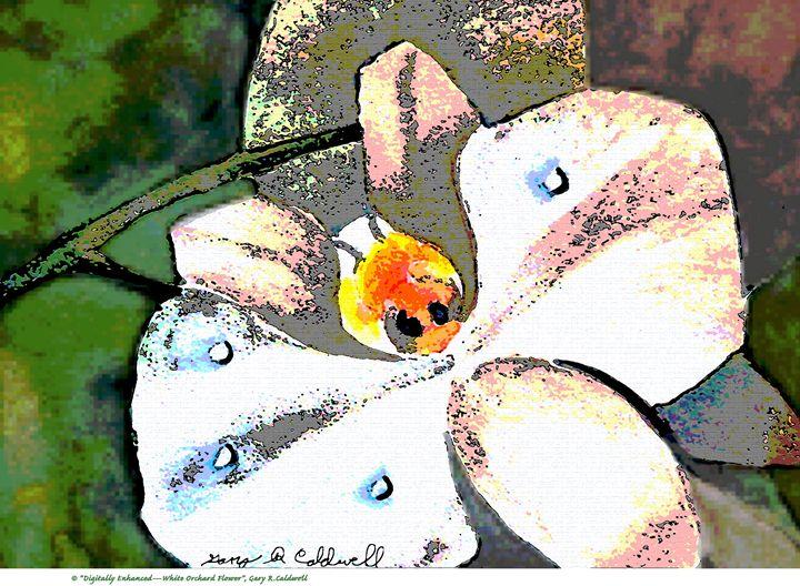 Dig. Enhanced-White Orchard Flower - Gary R. Caldwell   CADesign, Art & Photos